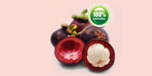 Garcinia Fruit - Garcinia Cambogia Fruit