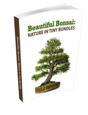 Beautiful Bonsai eBook