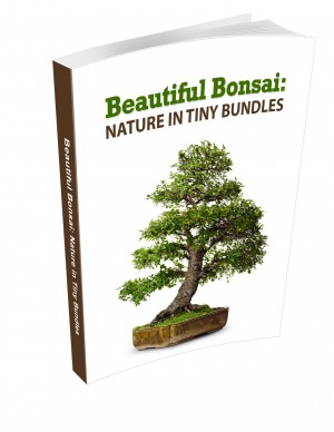 Beautiful Bonsai - Nature in Tiny Bundles eBook
