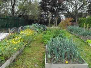 Cheap Landscaping Ideas - Vegetable and Herb Garden