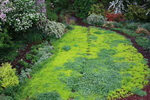 Simple Landscaping Ideas - Sedum and Clover Garden Landscape